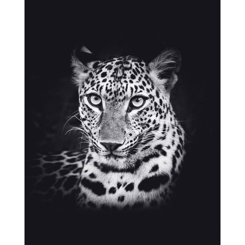 Affiche Leopard l.50 x H.40 cm