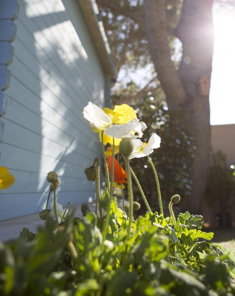 Des plantes pour sublimer les abords de la maison leroy for Les plantes de maison