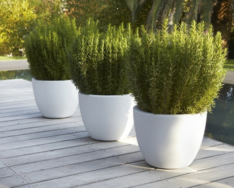 Des pots rotomoulés blancs viennent habiller votre terrasse