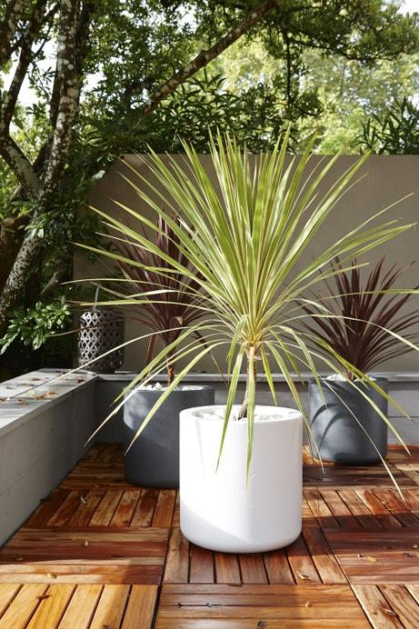 Pot de fleur sur terrasse