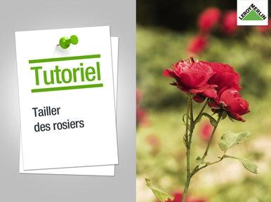 Tailler les arbustes et les arbres leroy merlin - Comment tailler les rosiers ...