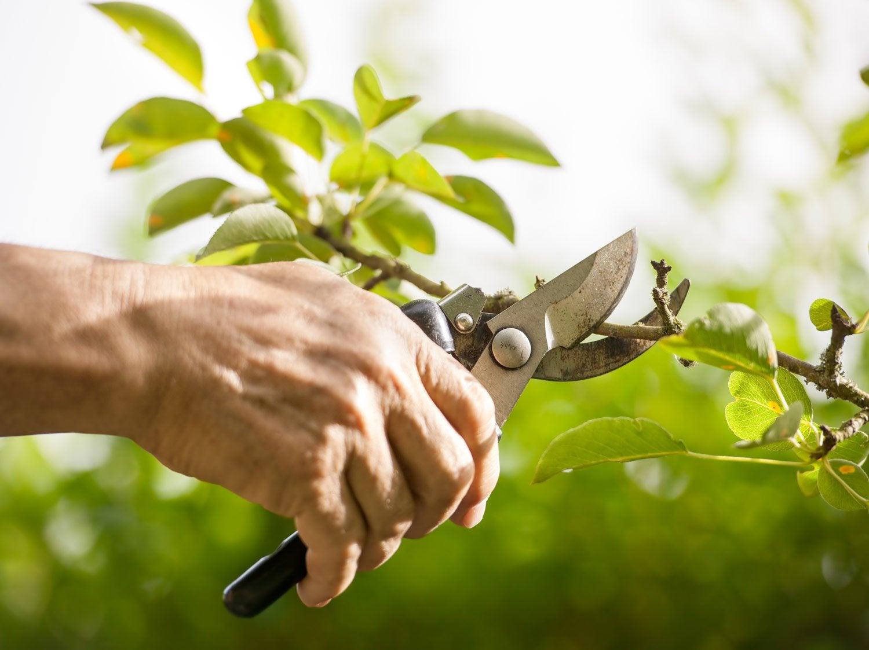 Tailler les arbustes et les arbres