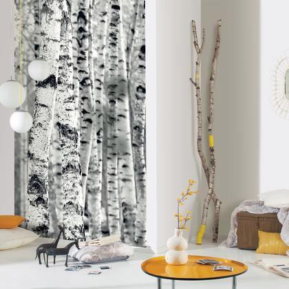 Papier Peint Vinyle Panoramique Sherwood Bouleau Noir Blanc