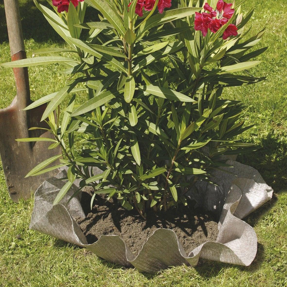 Pour Merlin De Bruyère Feutre Plantes Terre NorteneLeroy yvmnN08wO