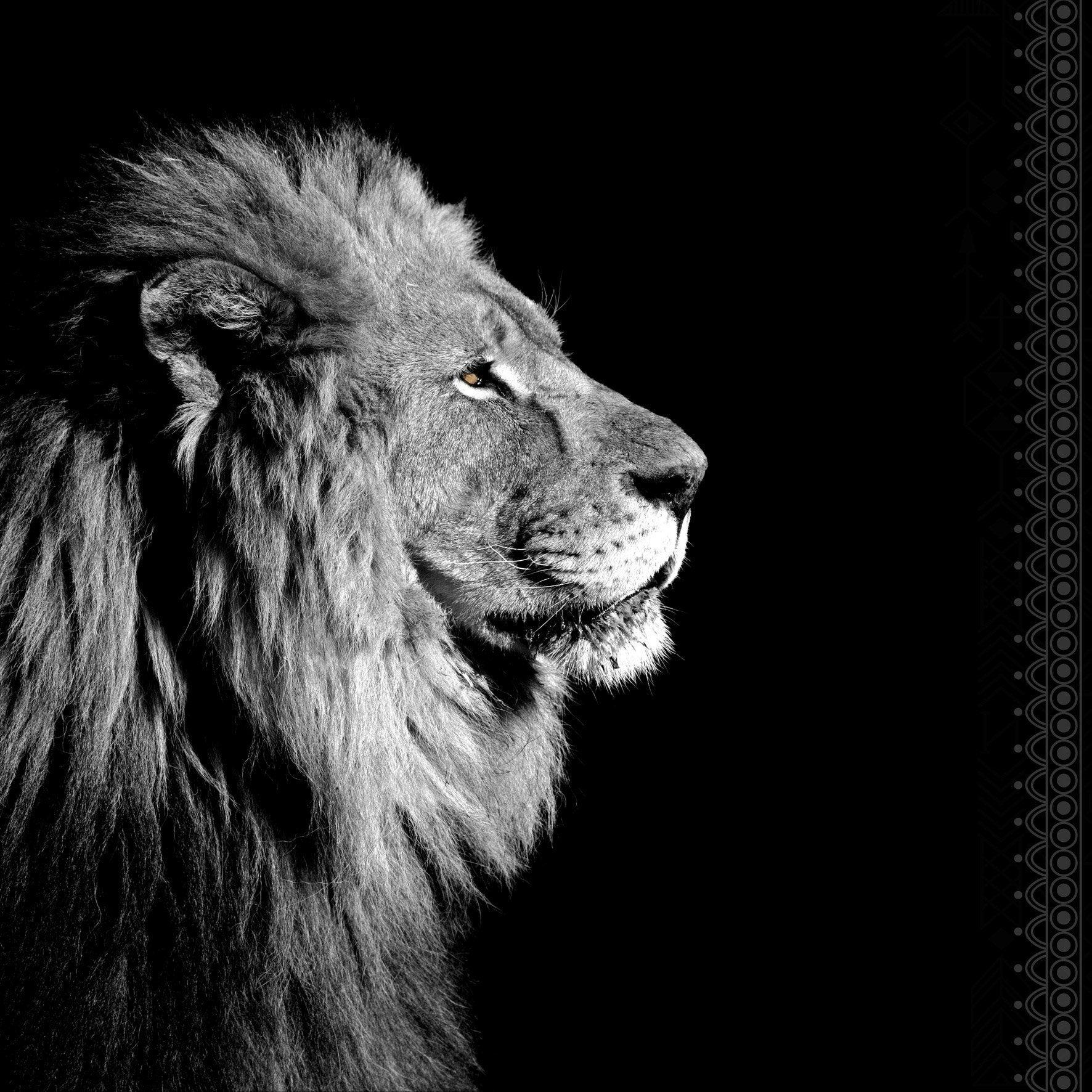 verre imprim lion de profil noir blanc noir blanc. Black Bedroom Furniture Sets. Home Design Ideas