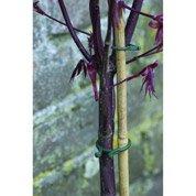 Fixe tiges anneaux pour plantes NORTENE