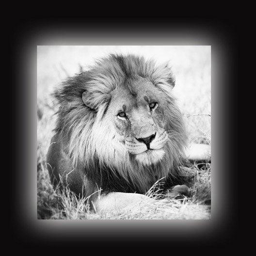 Toile led lion x cm leroy merlin - Tableau toile leroy merlin ...