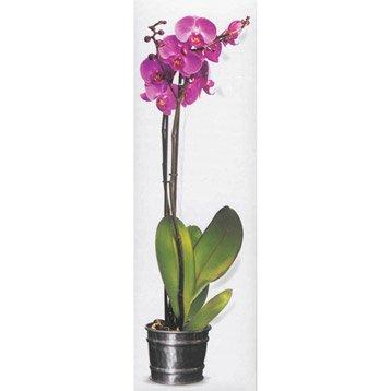 Orchidées, Larousse