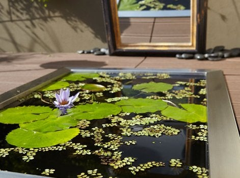 Faire un jardin japonais facile que faire au jardin en septembre luxe dco petit pont rouge - Que faire au jardin en septembre ...