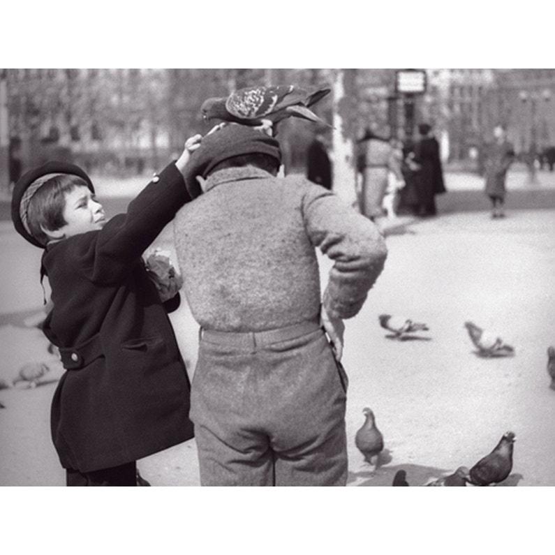 Affiche Enfants Et Pigeons L30 X H40 Cm