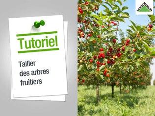 Tailler des arbres fruitiers