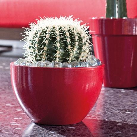 Un pot de fleurs arrondi rouge pour un cactus