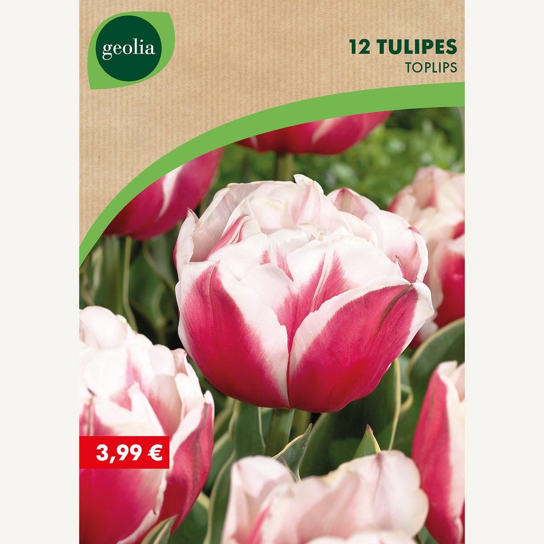 12 Tulipes Dble Tardwirosa 1112 Rouge Blanc