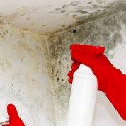 Atelier projet : comment dire stop à l'humidité des murs ?