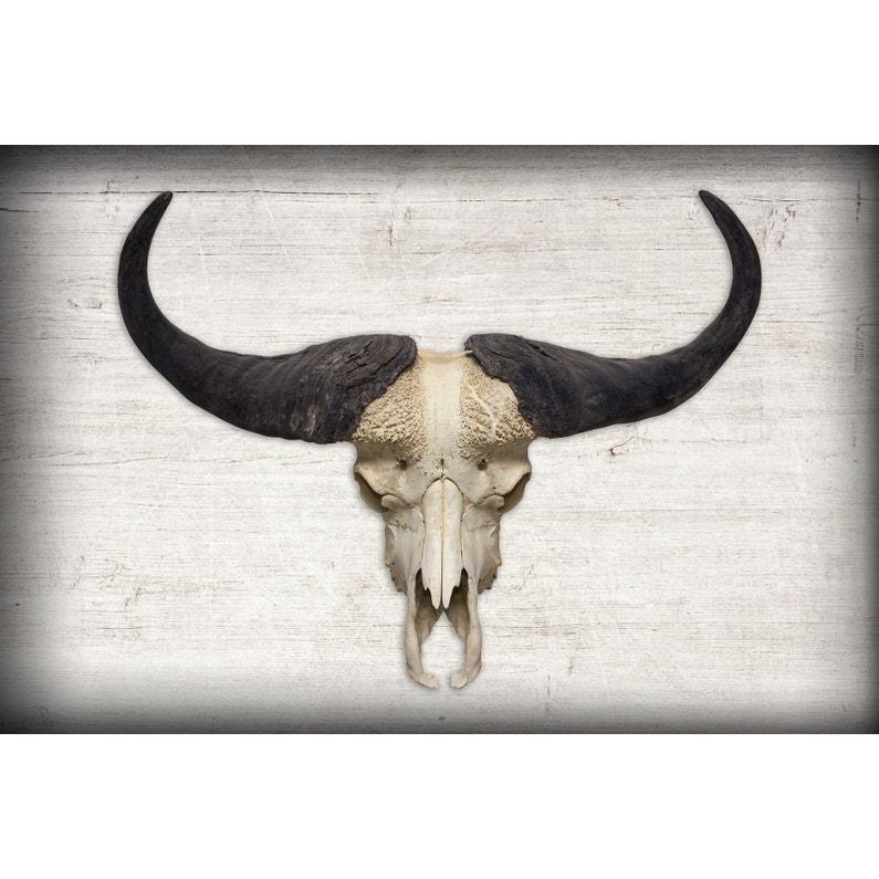 Toile Imprimée Buffalo Skull L97 X H65 Cm