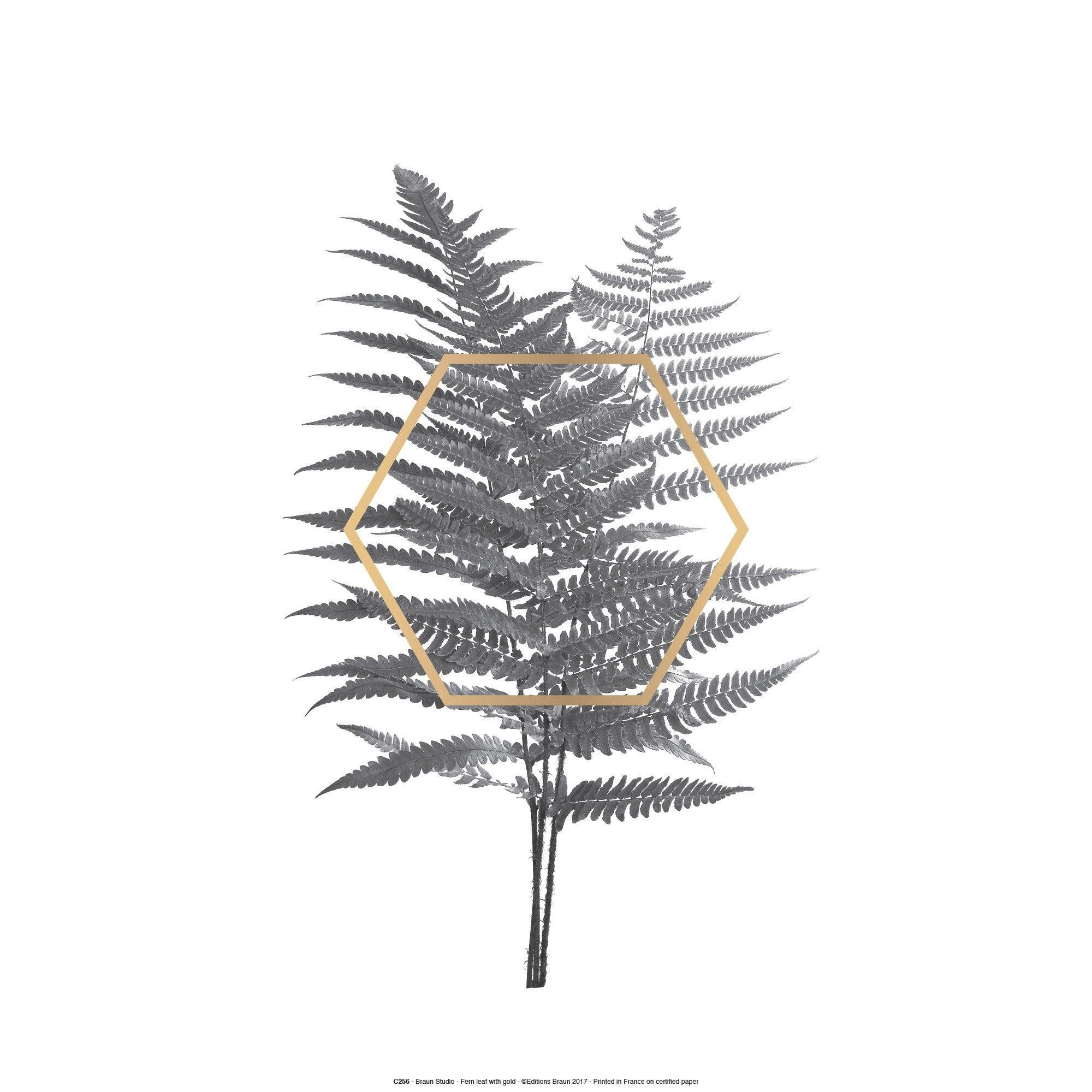 Affiche Fern leaf l.41 x H.31 cm