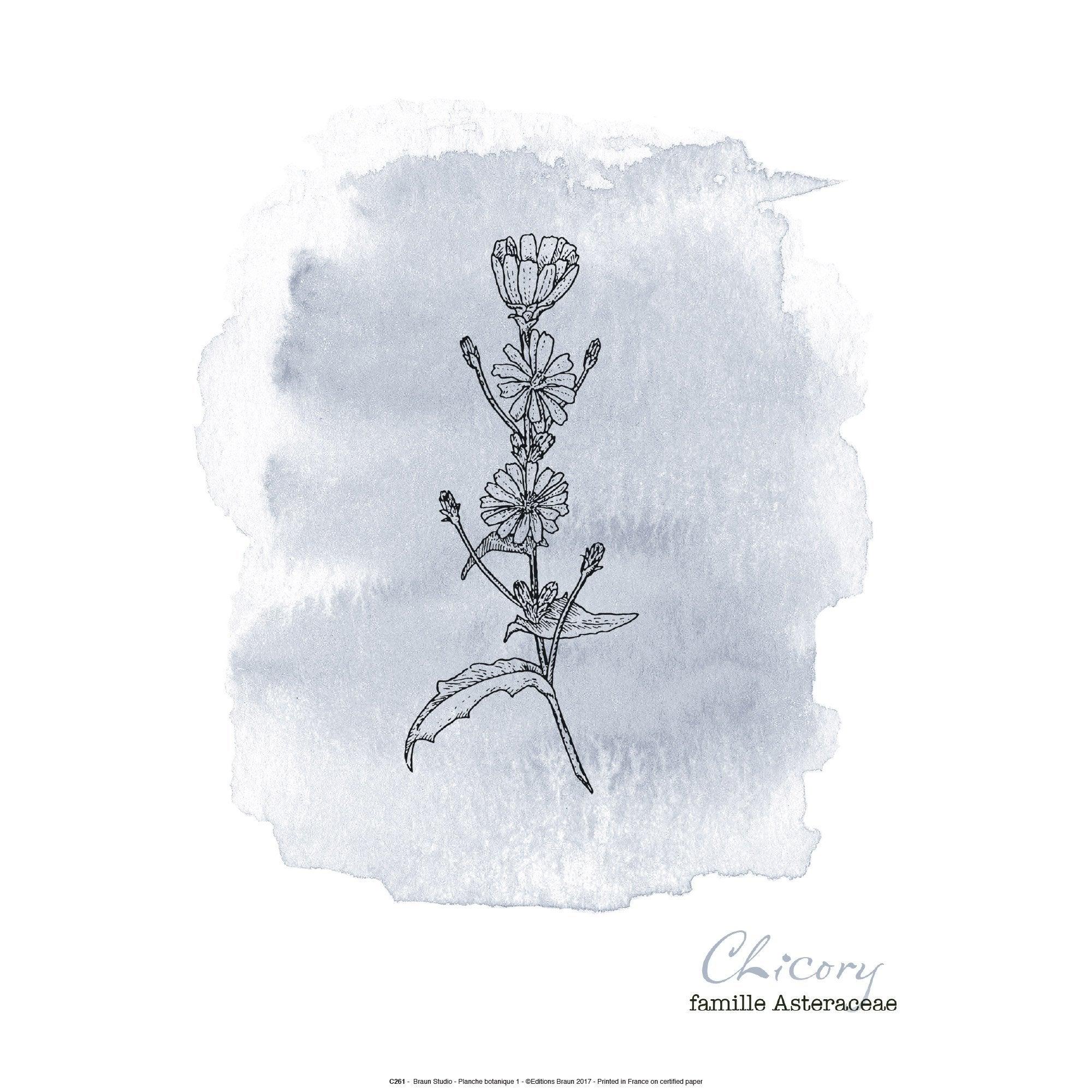 Affiche Botanique  gris l.41 x H.31 cm