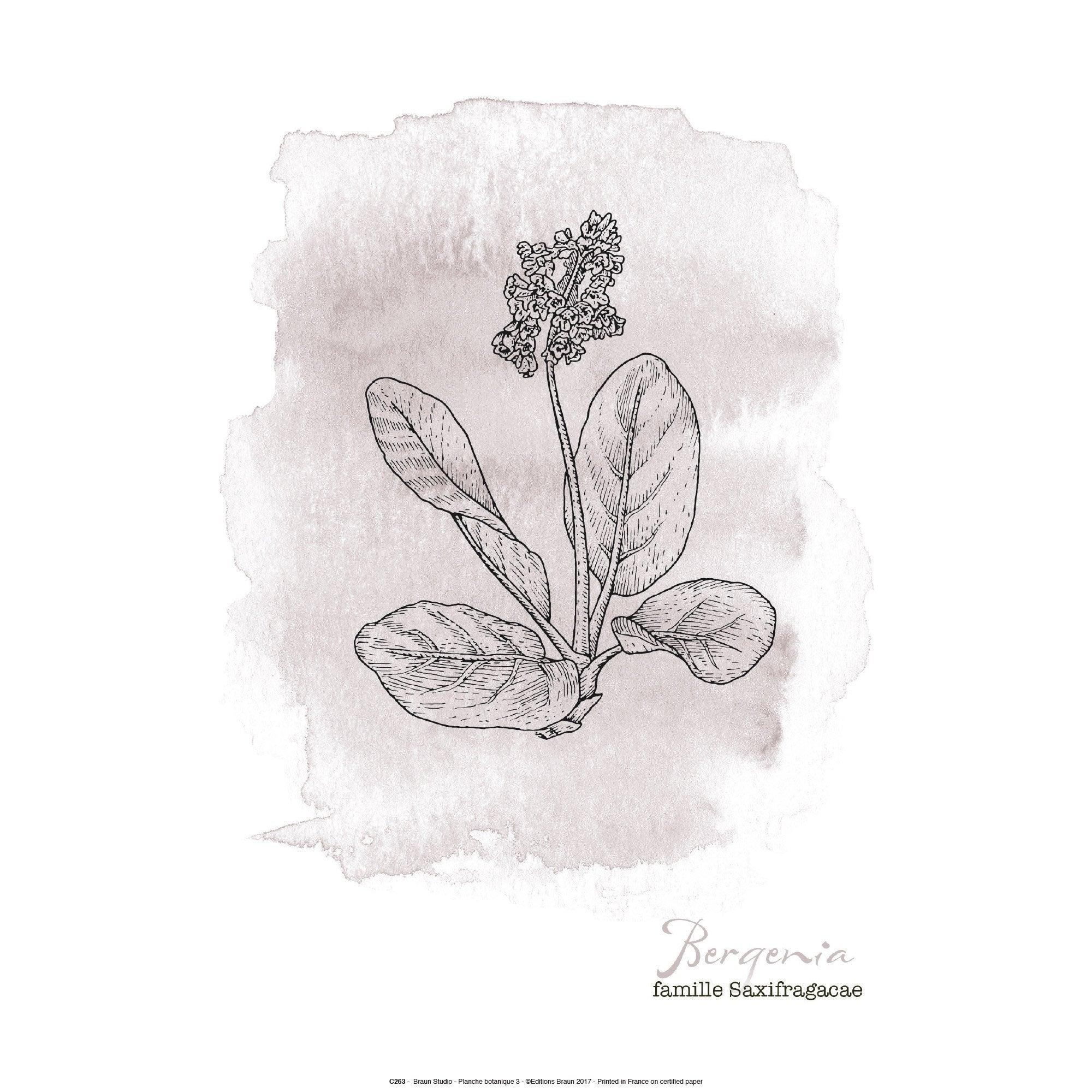 Affiche Botanique beige l.41 x H.31 cm