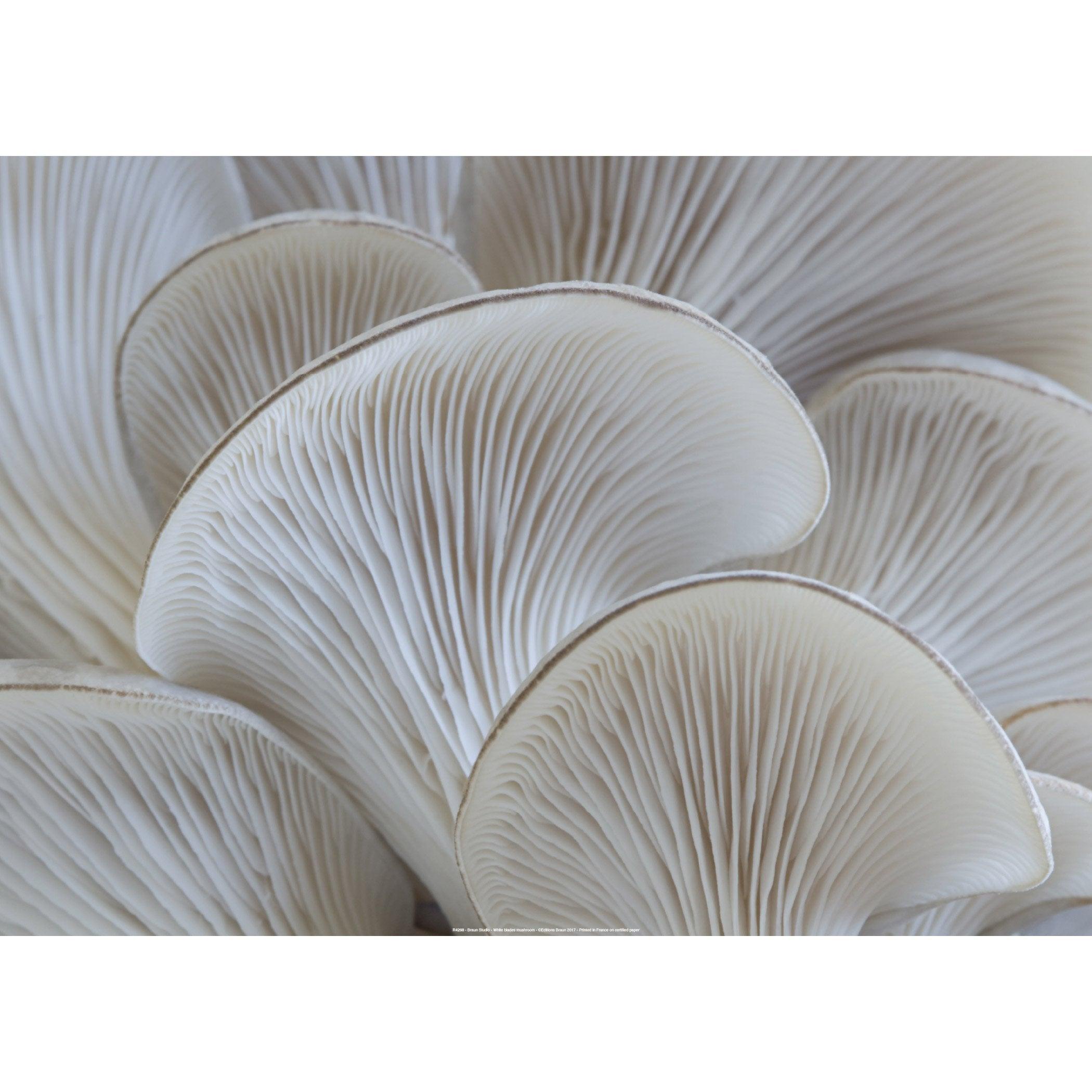 Affiche White mushroom l.71 x H.51 cm