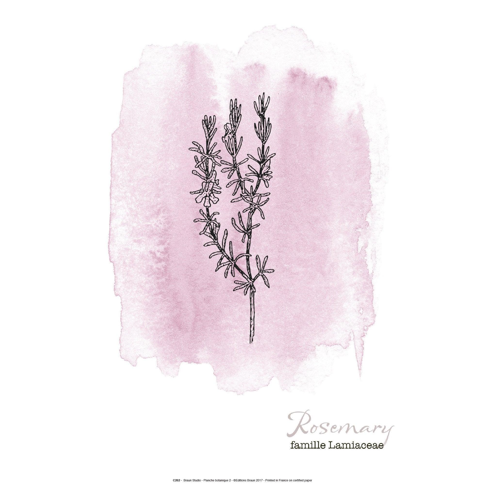 Affiche Botanique rose l.41 x H.31 cm