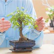 Comment découvrir les principes du Feng shui ?