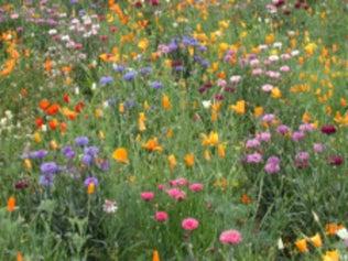 Tout savoir pour prévenir l'apparition des mauvaises herbes