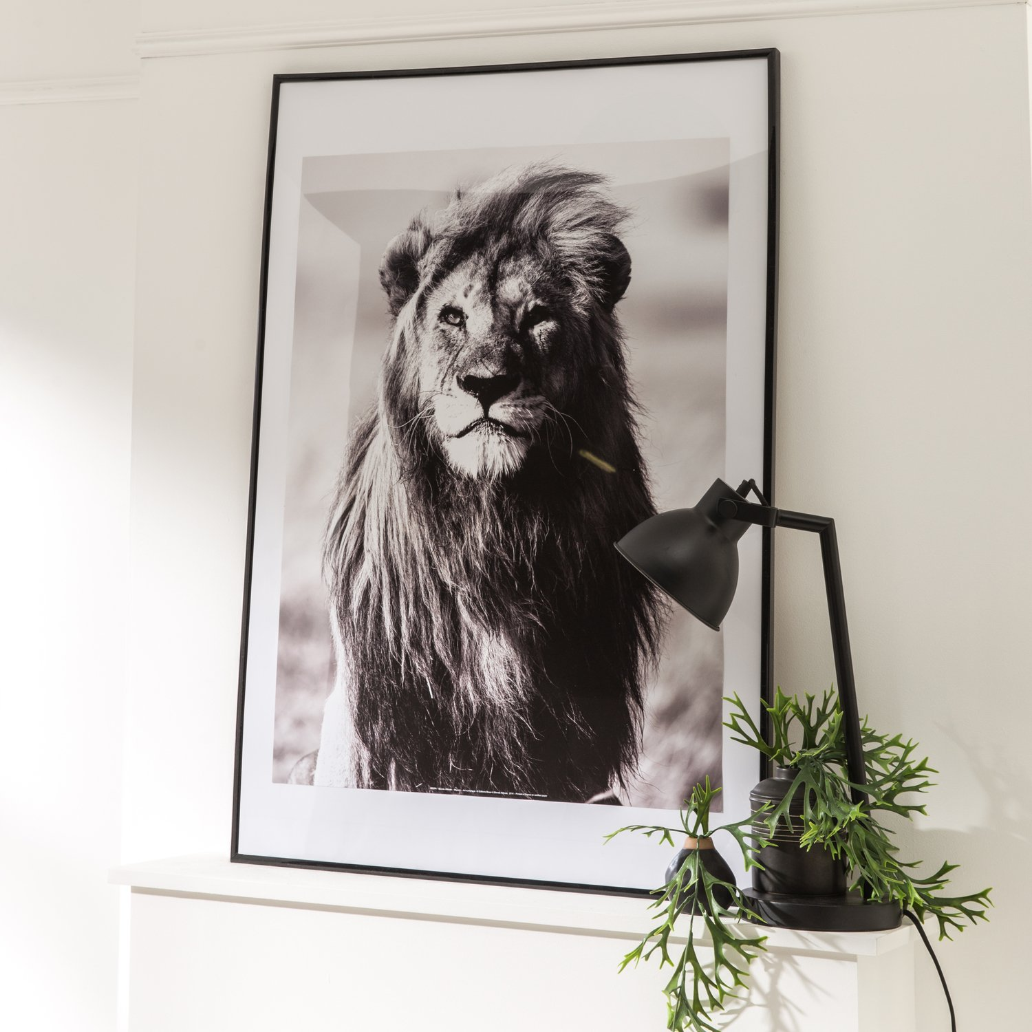 une affiche lion sous cadre pour finaliser sa d coration. Black Bedroom Furniture Sets. Home Design Ideas