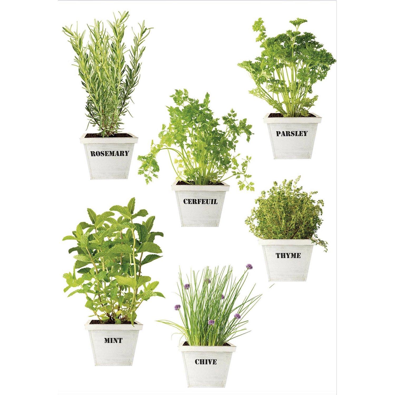 Sticker plantes aromatiques 21 cm x 29 7 cm leroy merlin - Plantes aromatiques cuisine ...