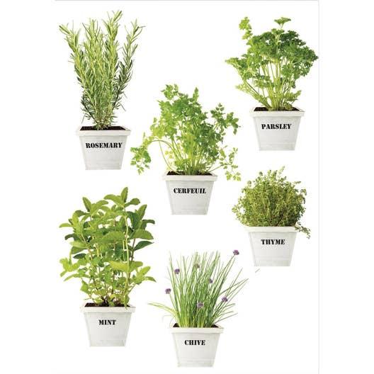 Sticker plantes aromatiques 21 cm x 29 7 cm leroy merlin for Plantes aromatiques cuisine