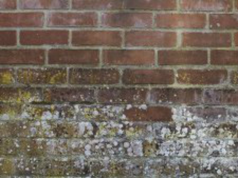 Traiter les murs contre l'humidité (mur poreux, friable, avec mousses, etc)