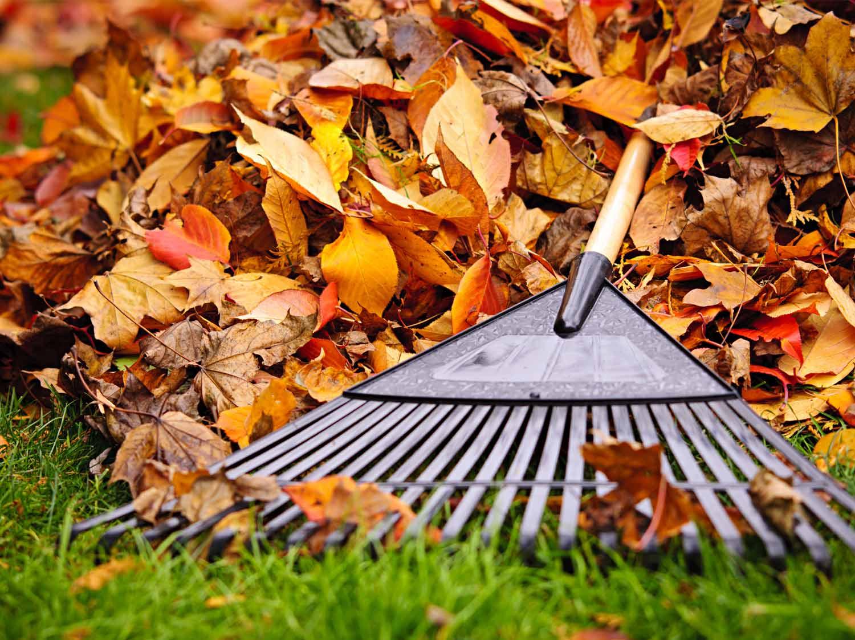 10 astuces pour entretenir son jardin en automne