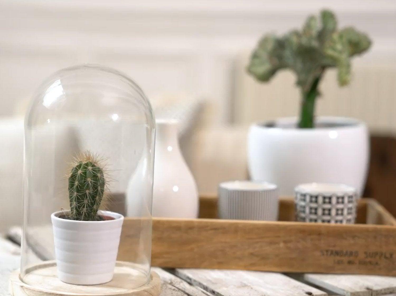 Tendance cactus pour un intérieur exotique