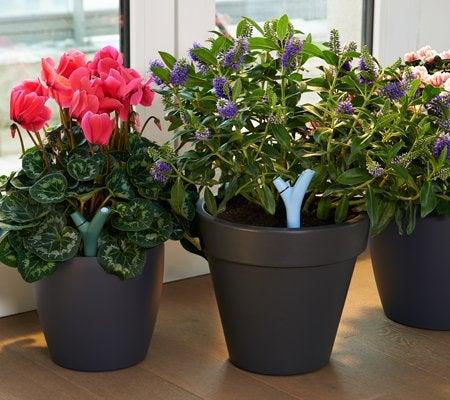 capteur connect pour plantes parrot flower power marron leroy merlin. Black Bedroom Furniture Sets. Home Design Ideas