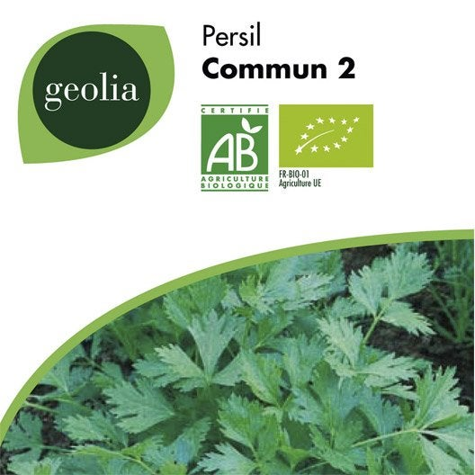 Persil commun geolia leroy merlin for Entretien persil jardin