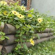Retenue de terre à planter bois naturel, H.40 x L.110 cm