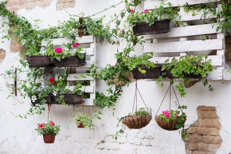 Des palettes transformées en jardinières