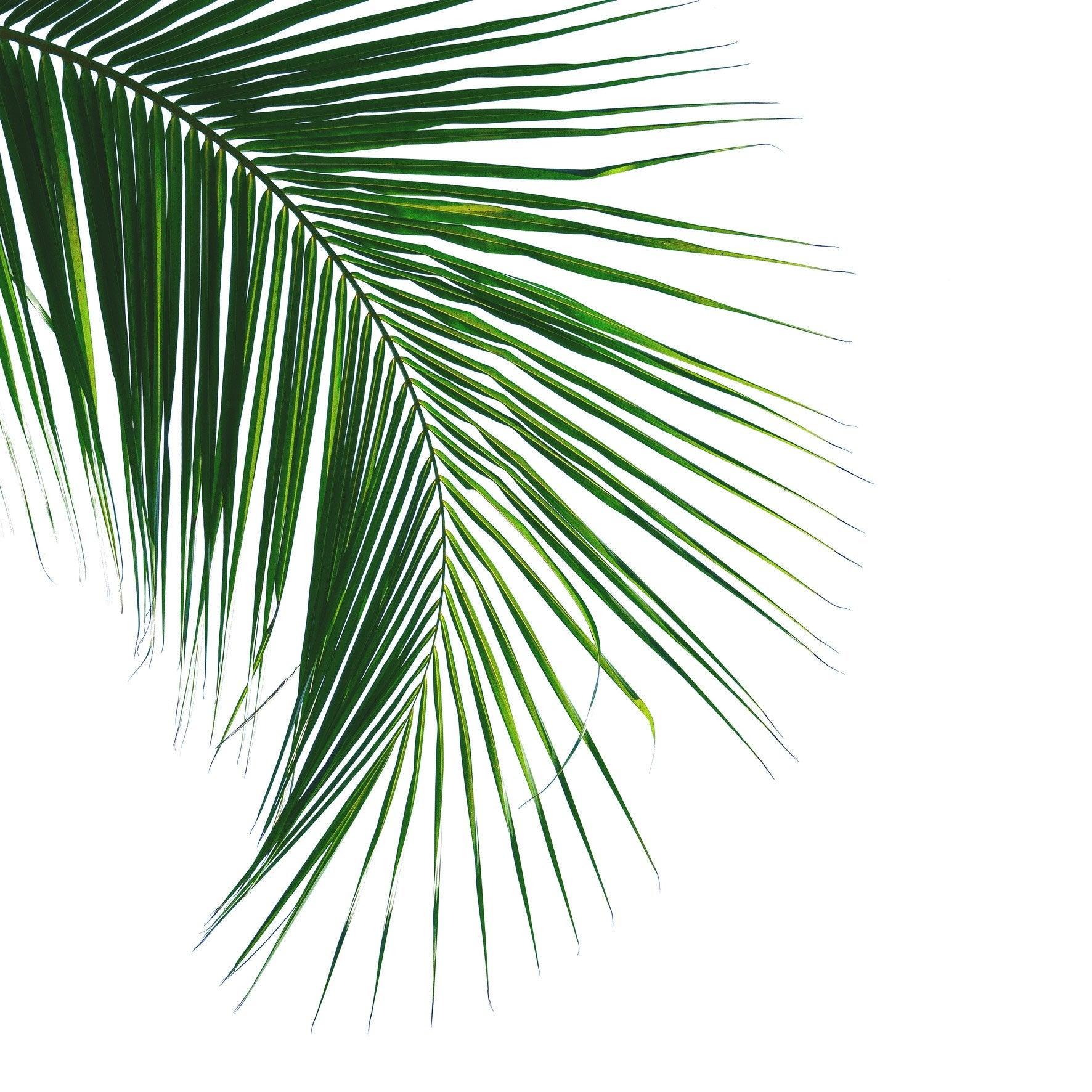 Verre imprimé FEUILLE, vert et blanc ARTIS l.30 x H.30 cm