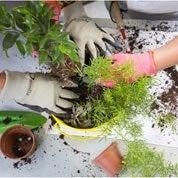 Comment réaliser les gestes de base du jardinage pour enfant ?
