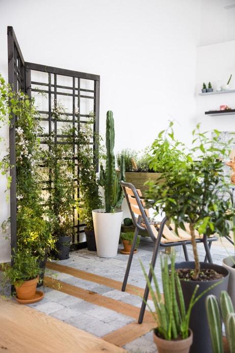 Arborer la terrasse par diverses plantes