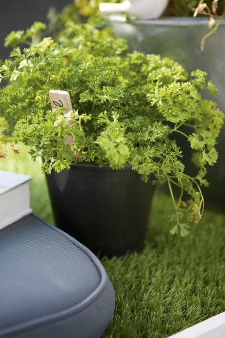 Des herbes aromatiques sur la terrasse