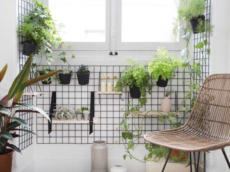 R aliser un mur v g tal leroy merlin for Realiser un mur vegetal exterieur