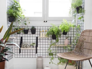 Réaliser un mur végétal