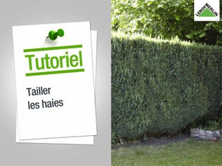 Tailler les haies